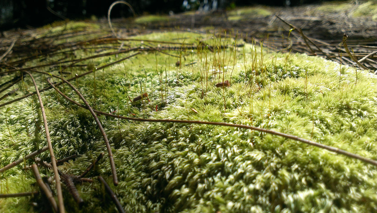 Sprouting Carpet By Lliaolsen On Deviantart