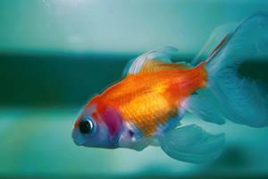 fish by TamyTamyTamy