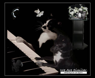 Catplaylist-s3-ep34-we-are-similar by mnighty