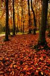 Blairadam Forest floor