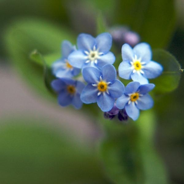 Azul I