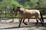 Horse stock- Jazzy 2