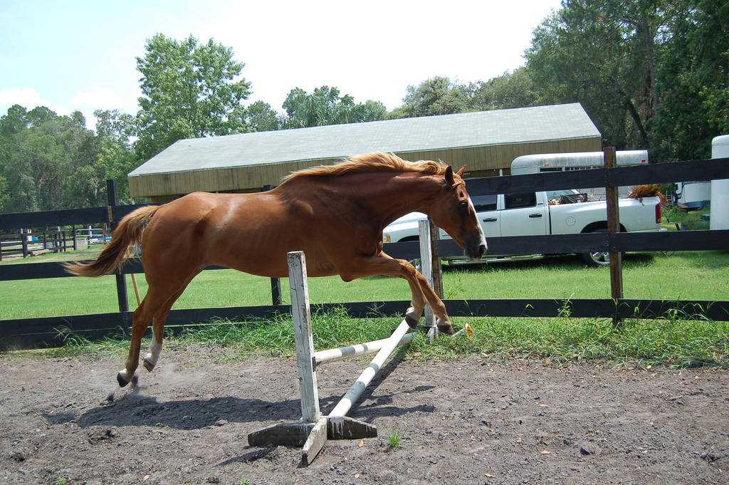 Chestnut horse jumping stock 2 by Carnival-ride-Stock on ... - photo#4