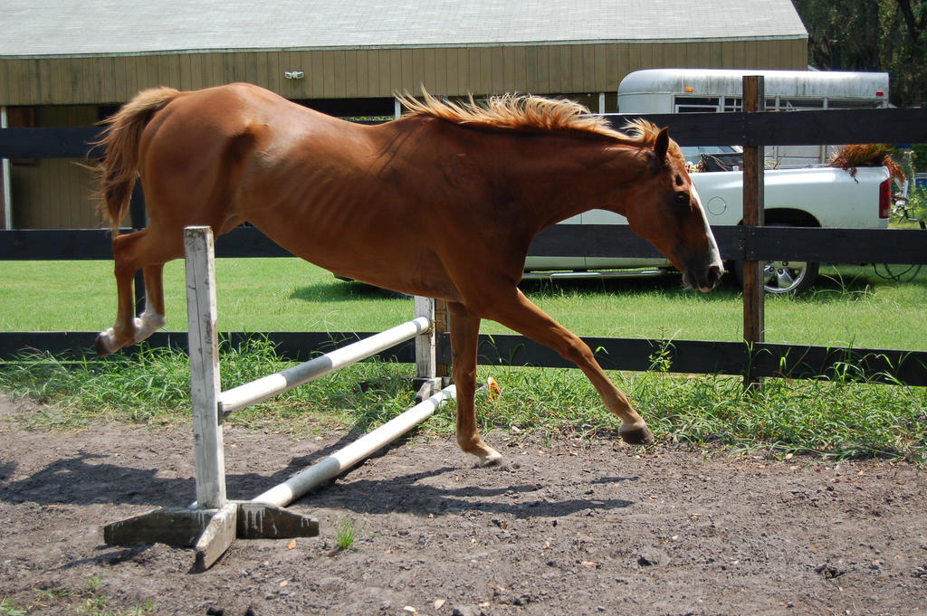 Chestnut horse jumping stock 3 by Carnival-ride-Stock on ... - photo#7