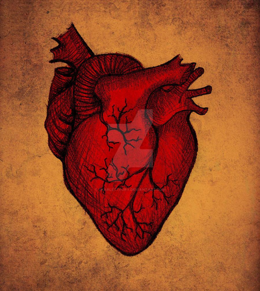 Human Heart Over Vintage Chart Of An Open Chest Cavity ...   Human Heart Art