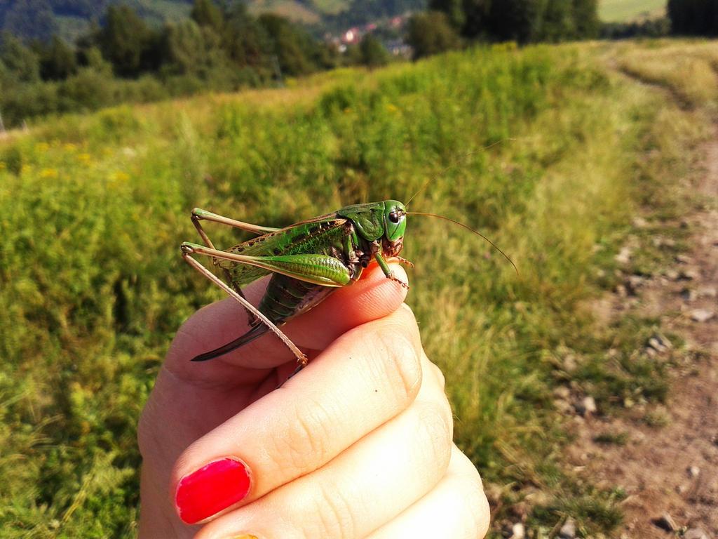 Grasshopper by malibu-z-mlekiem