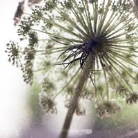 Umbrella by Aiae