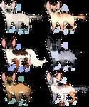 Feline Auction, CLOSED
