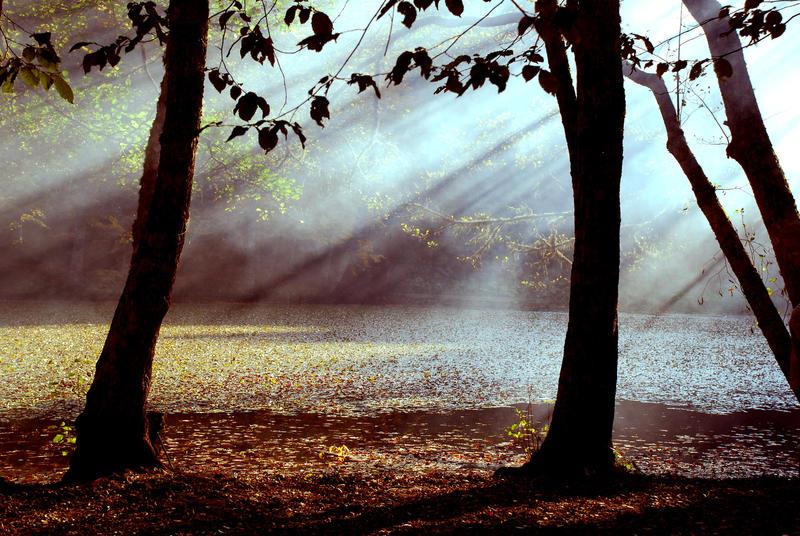 The Mist by allquiet