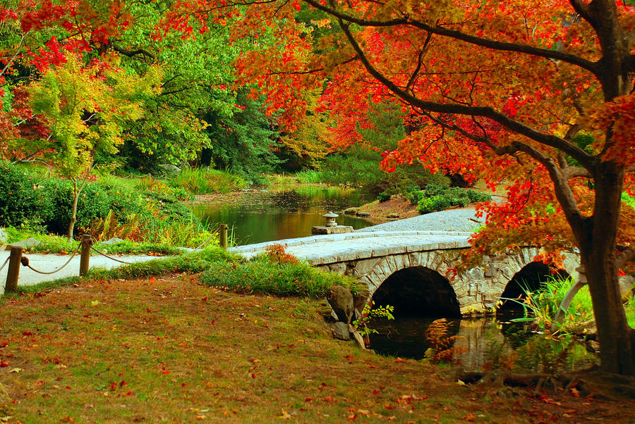 Jesen - fotografije - Page 4 Colors_by_kursatkarabulut-d4gcwav