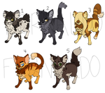 50 Point Cat Adopts