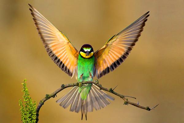 Beautiful bird by Hanae101