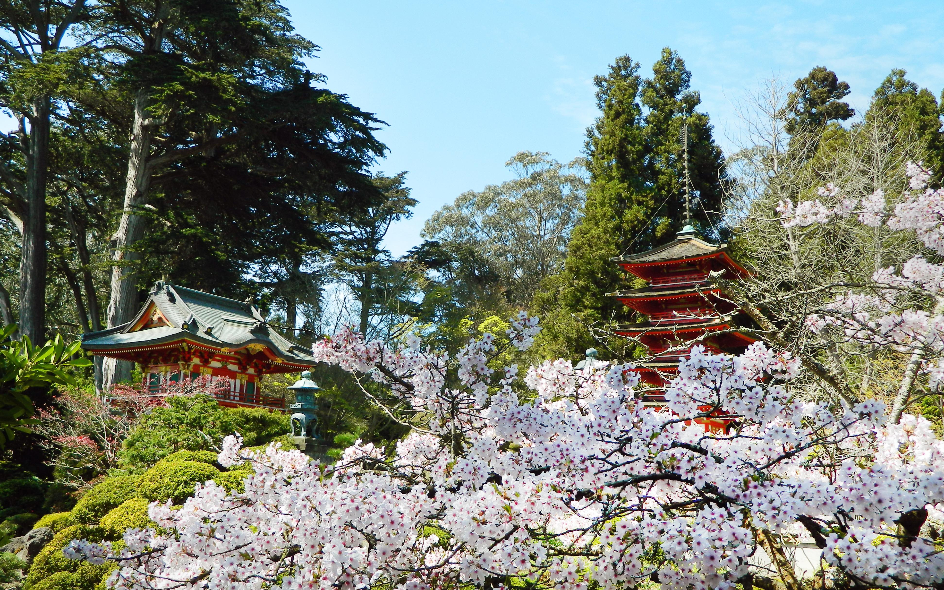 Sakura At The Japanese Tea Gardens By Bahr3dcg On Deviantart