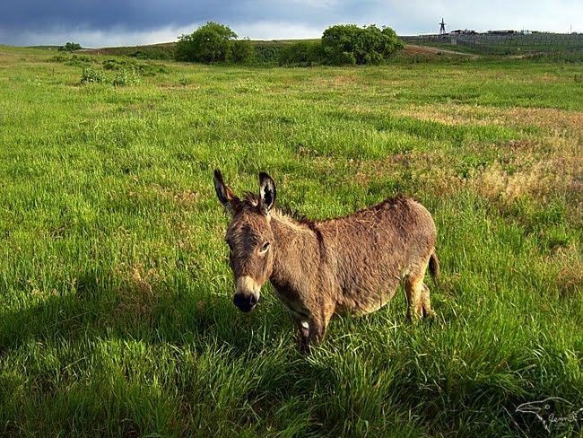 Range Mammal by Korppi-Clicks