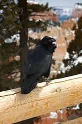 Bryce Raven by Korppi-Clicks