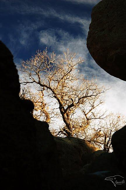 Burning Bush by Korppi-Clicks