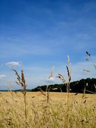 Lazy Summer Afternoon by Korppi-Clicks