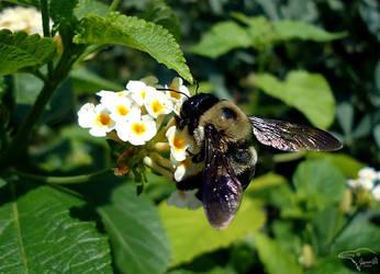 Bumblebee Business