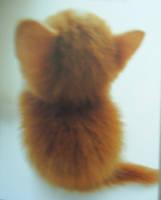 .:Cat:.