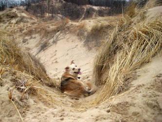 Dune dog by Luusan