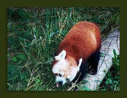 Hungry Hungry Panda