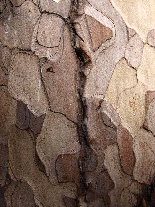 Texture stock 12 tree bark by Finsternis-stock