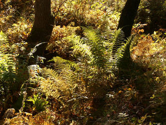 fern in forest 2 by Finsternis-stock