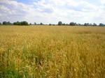 Landscape stock 44 cereals
