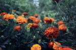 Burning flowers by Ayvazov-kun
