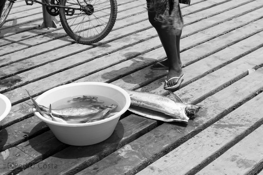 Seafood by PedroRLCosta
