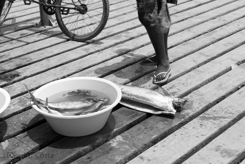 Seafood by PedroRLCosta