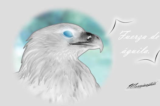 Aguila blanca