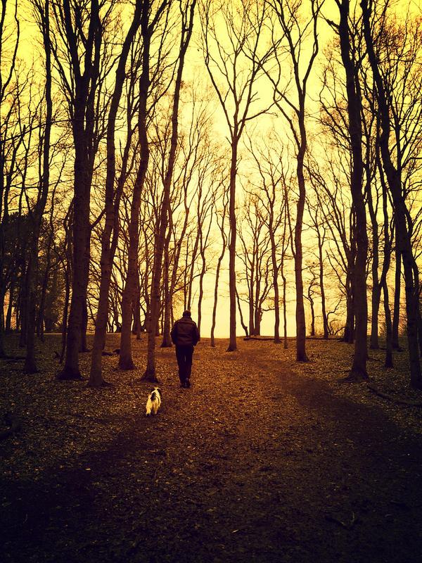 silent walk.. by dierenvriend
