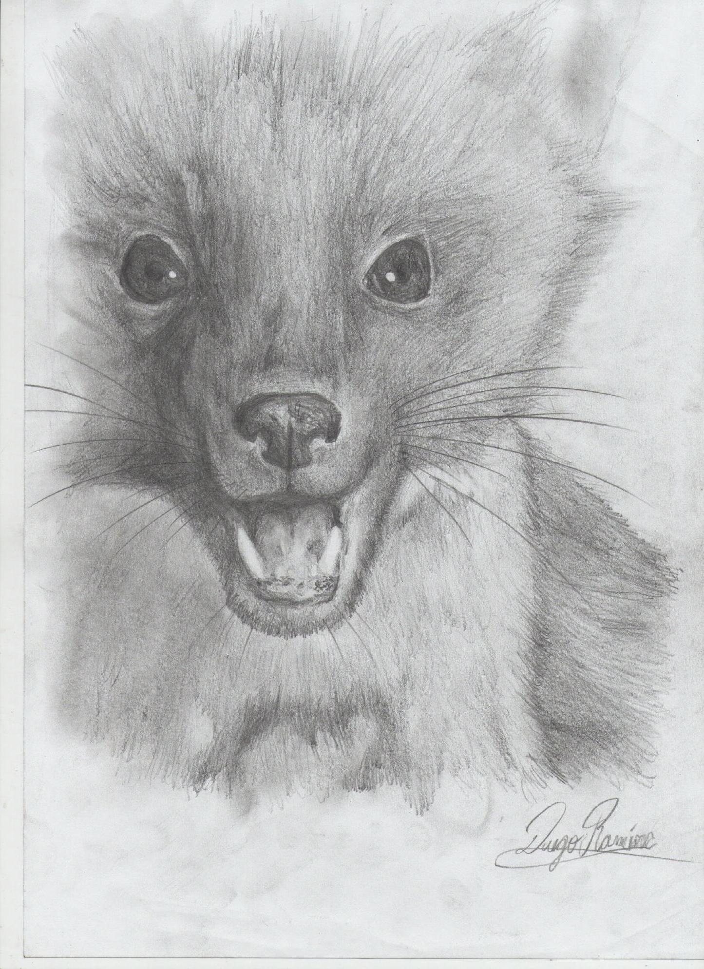 Algunos animales(dibujos a lapiz) - Taringa!