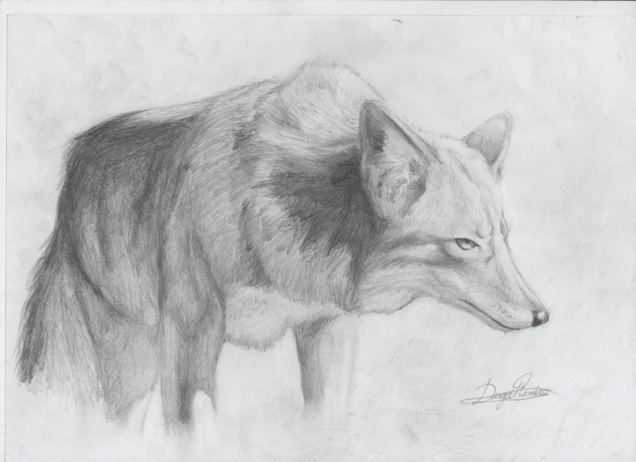 Algunos Animales(dibujos A Lapiz)