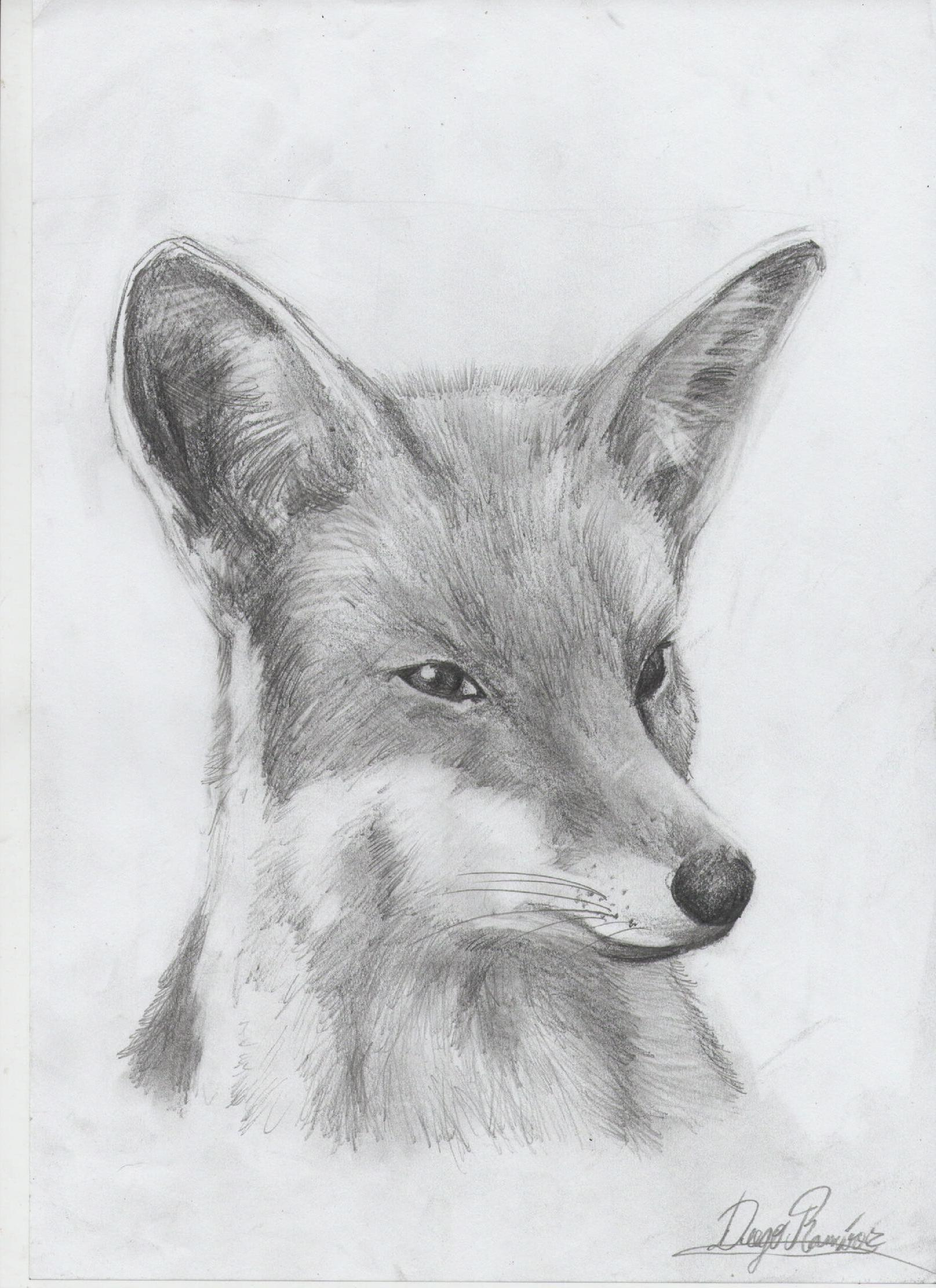 Dibujos A Lapiz Animales Traffic Club