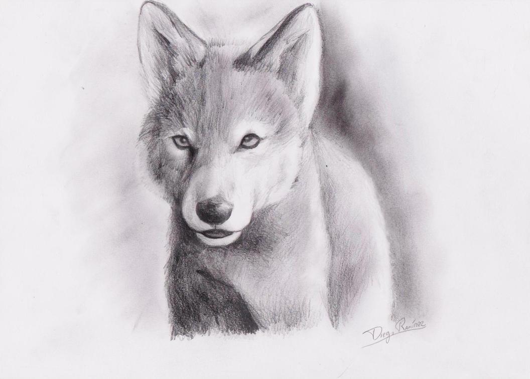 Baby Wolf by diegora on DeviantArt