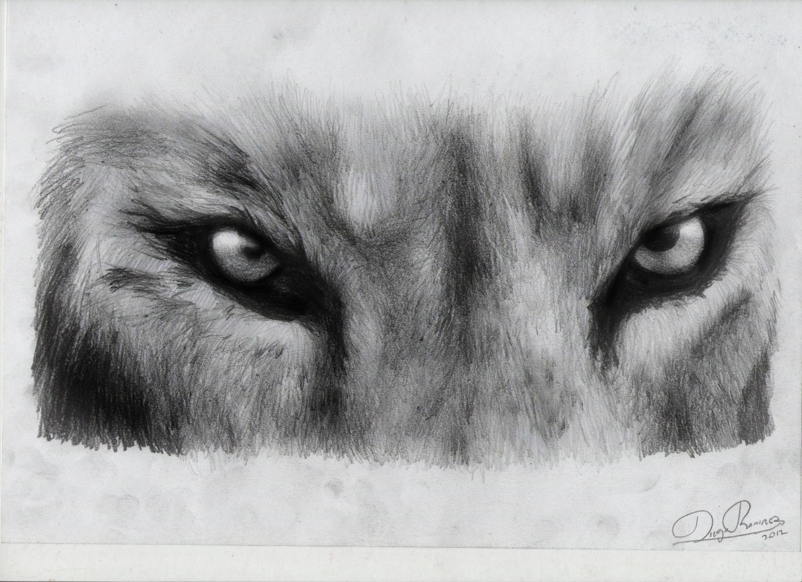 mirada de leon by diegora on DeviantArt