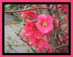 flowers by milkyway3