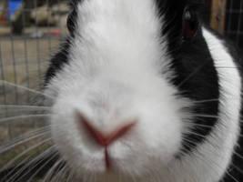 Bunny by EmoCappuchino