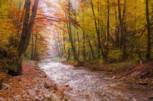 Polish Golden Autumn by topperGfx
