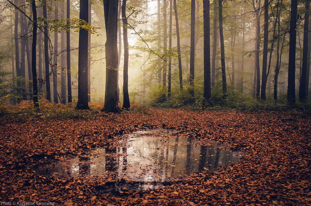 Forest Reflection by topperGfx