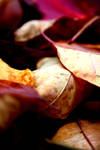 Autumn 3