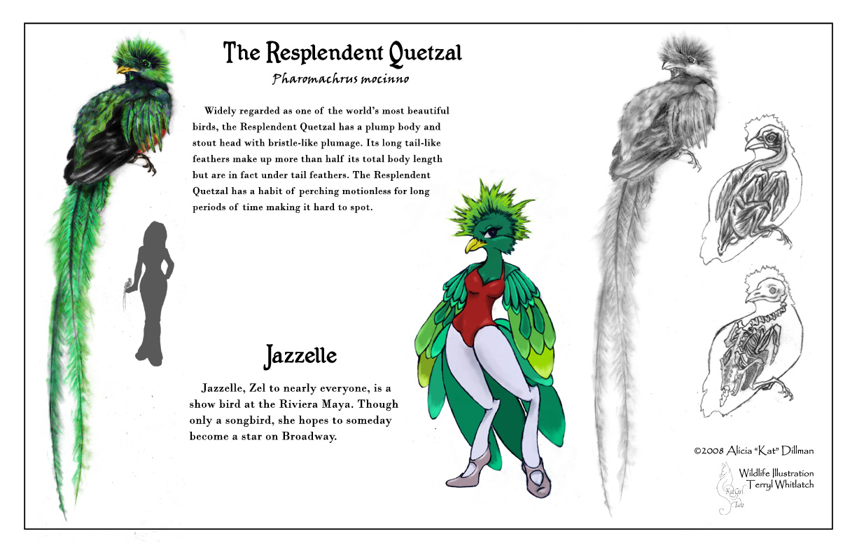 quetzal study by katgirlstudio on deviantart