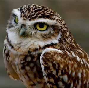 SpiritOwl's Profile Picture