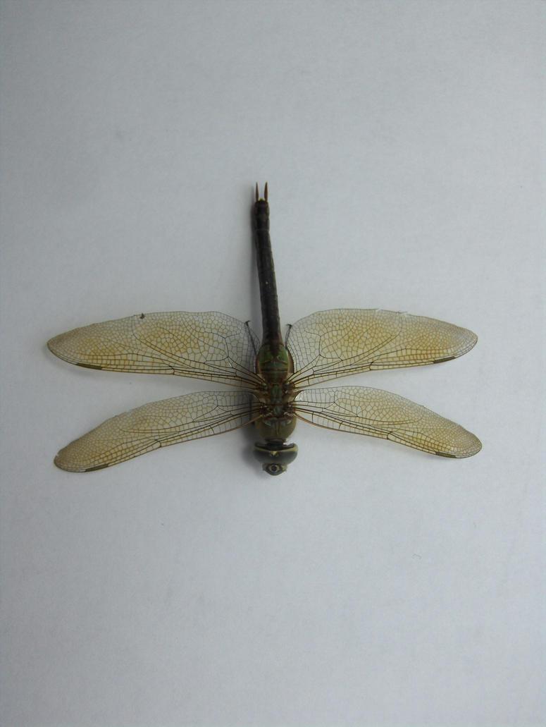 Dragonfly 9 by Skalski-Stock