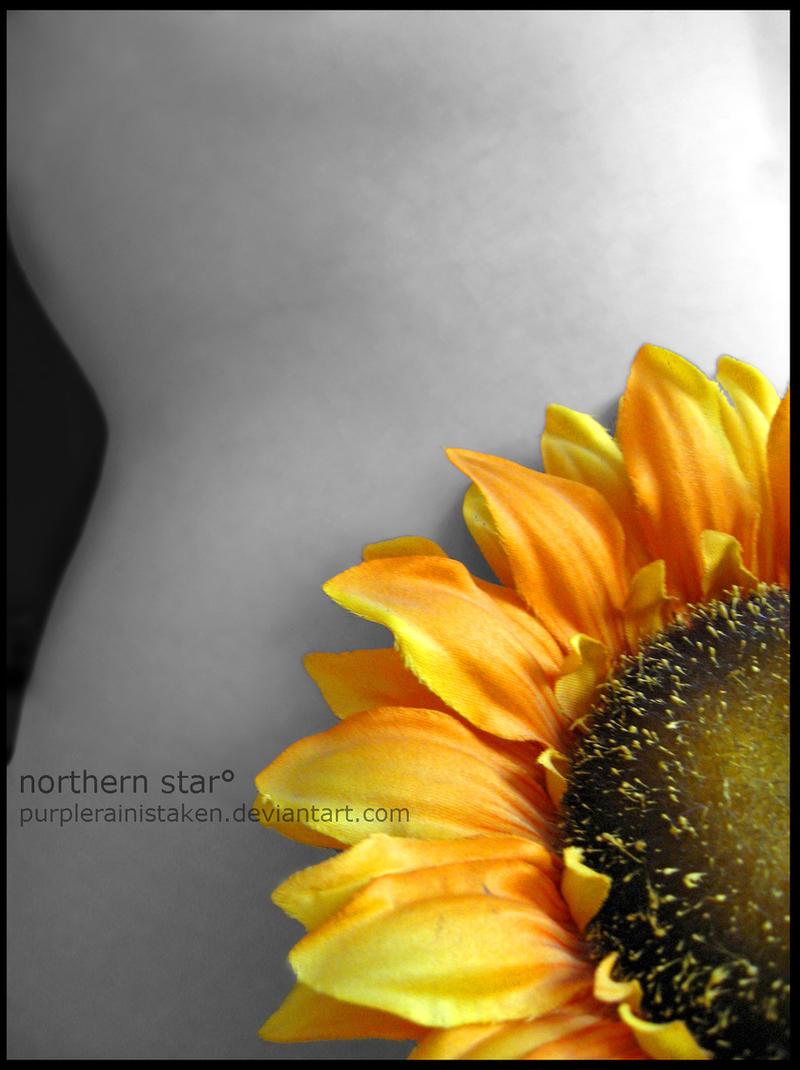 sunflower. by purplerainistaken