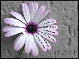 he loves me he loves me not. by purplerainistaken