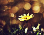 golden bokeh by purplerainistaken
