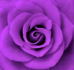 purple by purplerainistaken